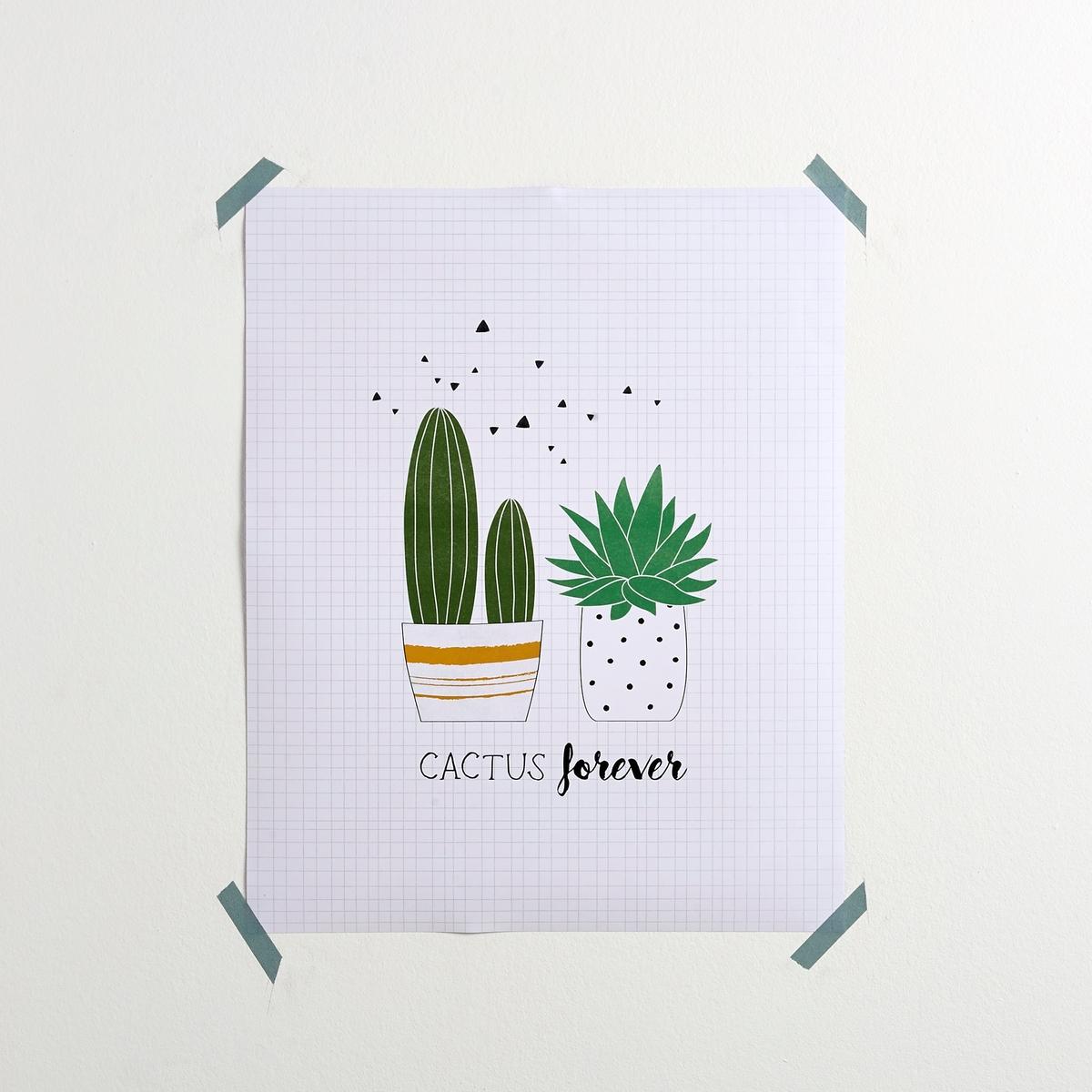 Poster cactus, Natissa