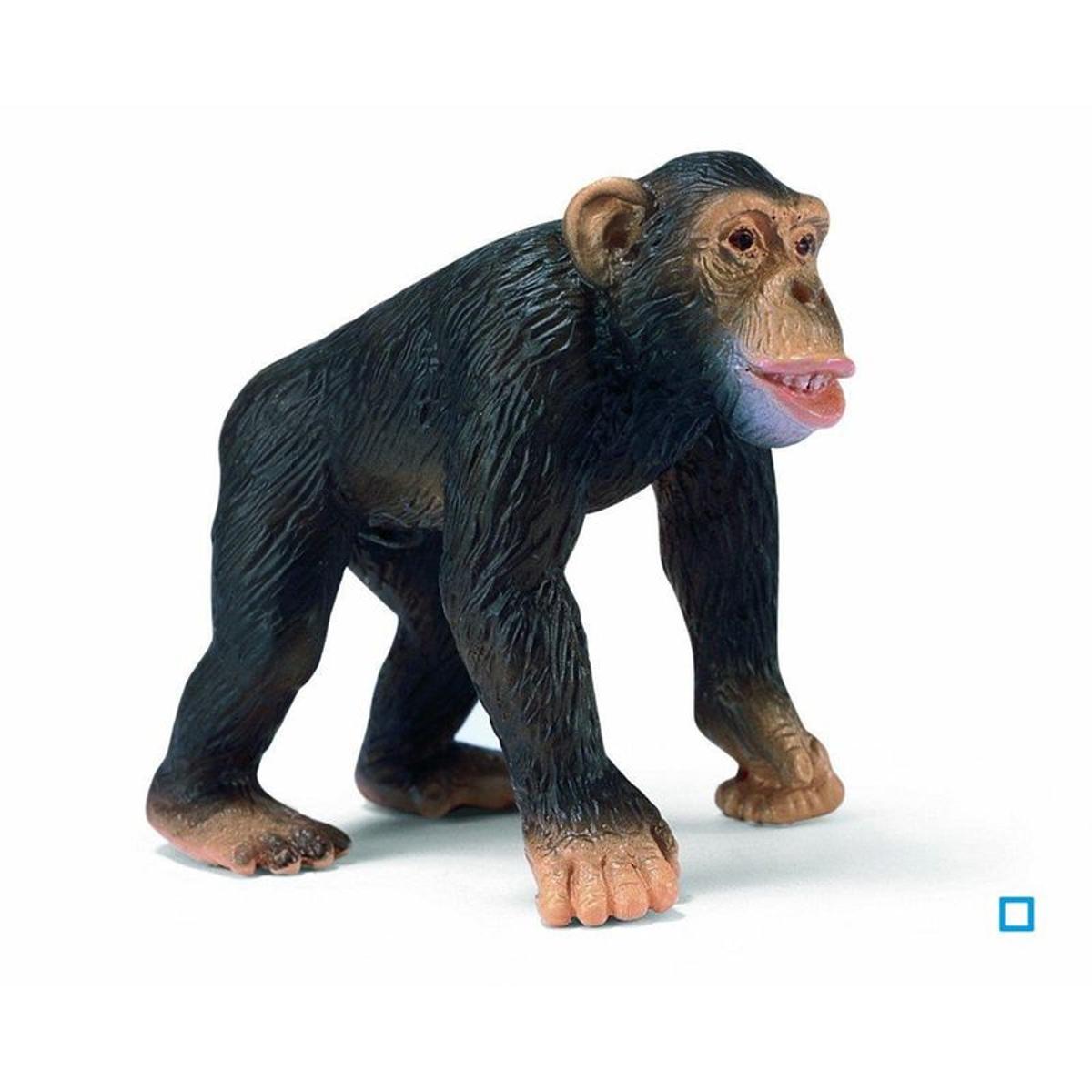 Chimpanzé Mâle - SCL14189