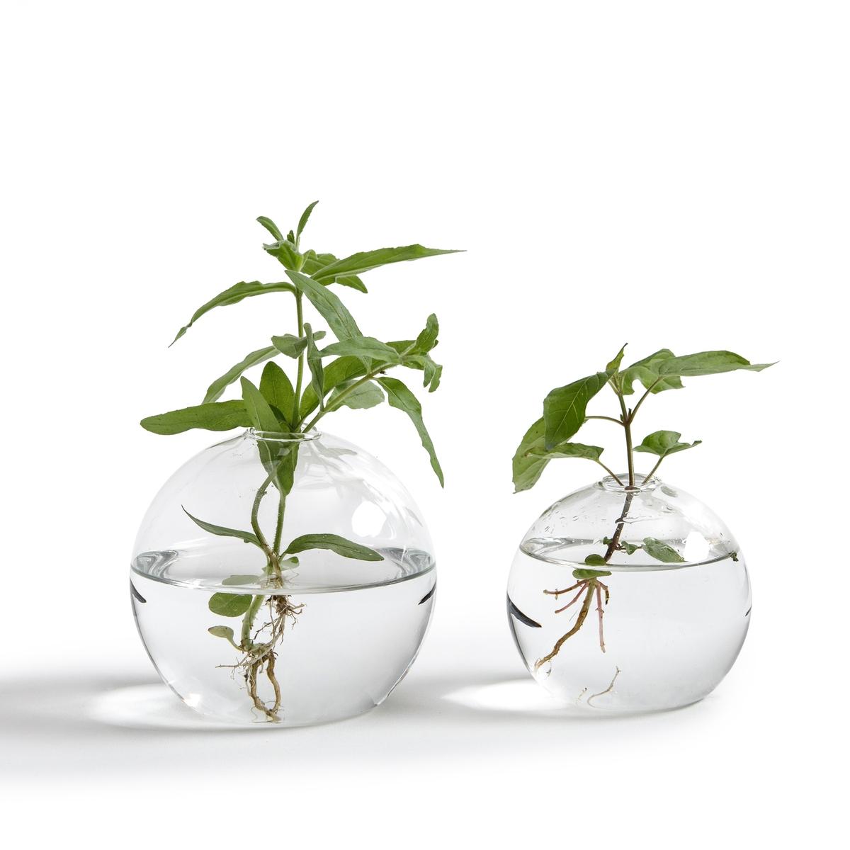 2 вазы для одного цветка, Cicerone