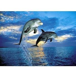 Puzzle 500 Pièces - Dolphins - CLE30139.3 CLEMENTONI
