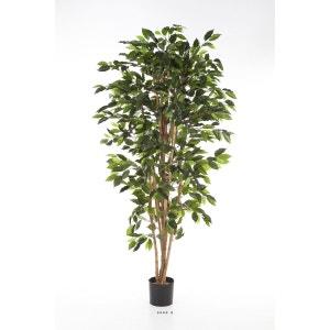 Ficus Nitida artificiel Vert H 180 cm 1008 feuilles en pot - choisissez votre taille: H 180 CM ARTIFICIELLES