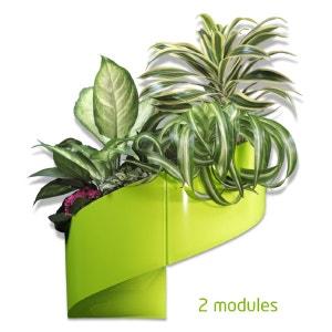Plante verte plastique la redoute for Soldes plantes vertes
