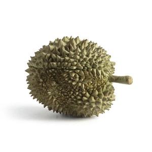 Doos klein model, Durian