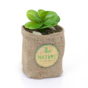 Plante artificielle - Hauteur 12,5 cm - Feuilles rondes ATMOSPHERA
