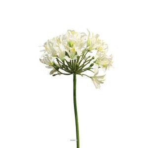 Agapanthe artificielle H 80 cm Superbe tete de D = 20 cm Crème - couleur: Crème ARTIFICIELLES