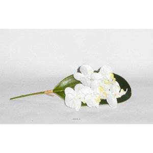 Orchidee Phalaenopsis Artificielle sur feuille 5 fleurons Crème - couleur: Crème ARTIFICIELLES