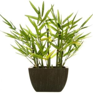 Bambou dans son pot noir 36x36xH35cm PIER IMPORT
