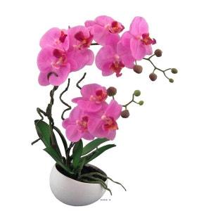 orchidee 66 f
