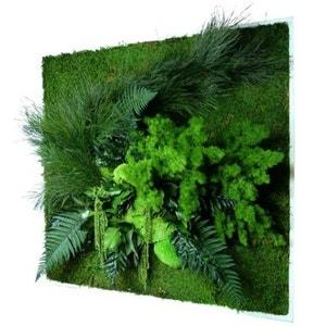 Tableau nature carré XL avec plantes stabilisées 80x80cm JARDINDECO