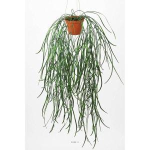 Hoya linearis artificielle en pot H 90 cm tres originale suspension ARTIFICIELLES