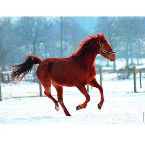 Puzzle 250 pièces : Cheval dans la neige NATHAN