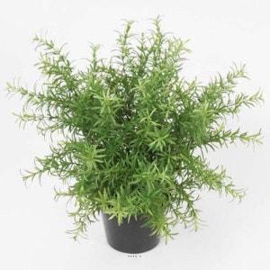 Asparagus artificiel en pot H 30 cm tres dense ARTIFICIELLES
