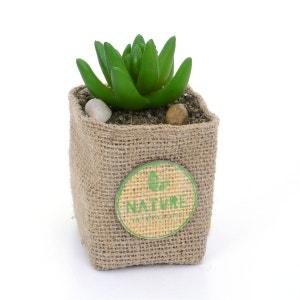 Plante artificielle - Hauteur 12,5 cm - Feuilles allongées et arrondies ATMOSPHERA