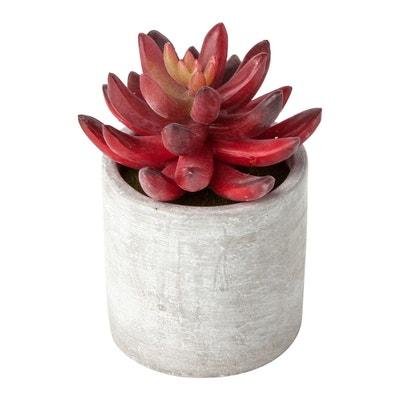 Plante Interieur Fleurie La Redoute