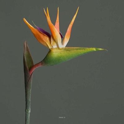 Strelizia Arabica artificiel H 80 cm oiseau du paradis tete latex ARTIFICIELLES