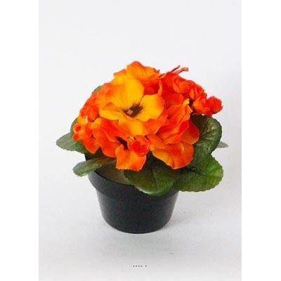 Pensee Fleur La Redoute