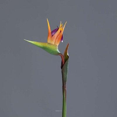 Strelitzia Arabica artificiel H 62 cm oiseau du paradis tete latex ARTIFICIELLES