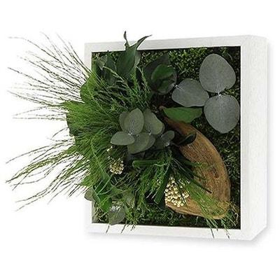 Tableau Végétal Nature Mono Avec Plantes Stabilisées Tableau Végétal Nature  Mono Avec Plantes Stabilisées JARDINDECO