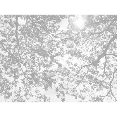 Papiers Peints Panoramiques Into The Wild ACTE DECO