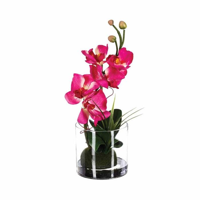 orchidee 32