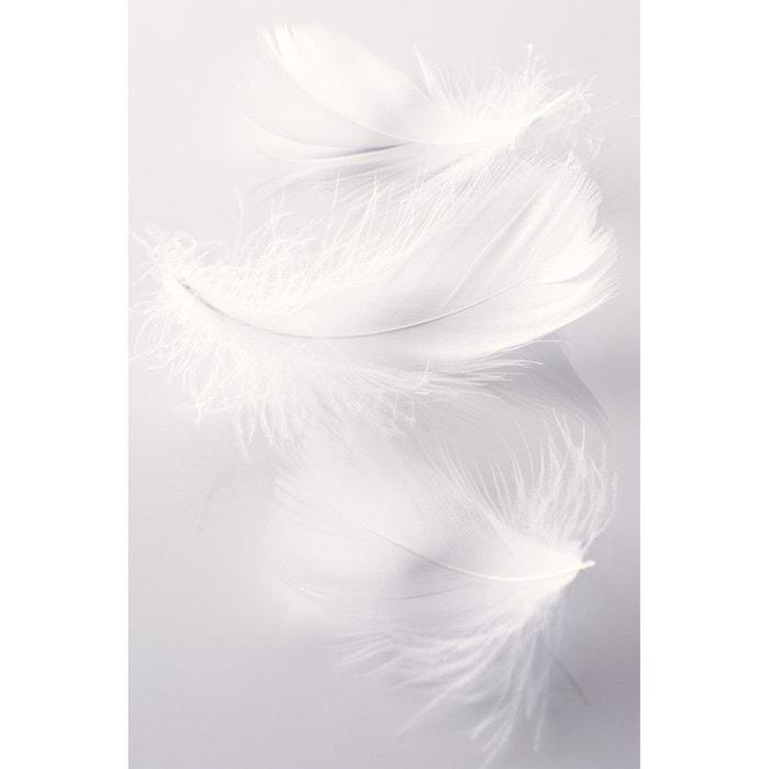 papiers peints panoramiques plumes 02 sepia gris clair. Black Bedroom Furniture Sets. Home Design Ideas