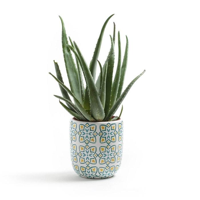 Cache pot carreaux de ciment ivan jaune bleu la redoute for Solde plante interieur
