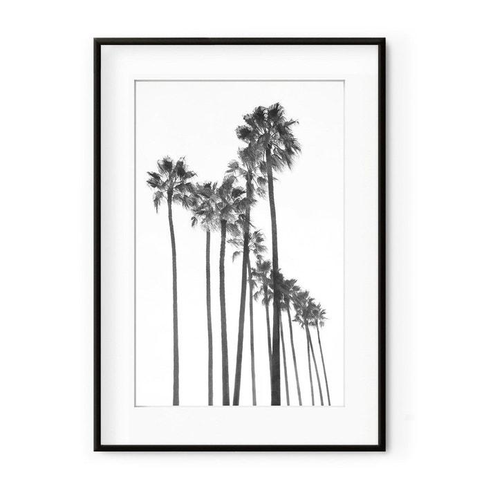 Photographie Encadrée - Groupe de Palmiers noir et blanc  DAVID & DAVID STUDIO image 0